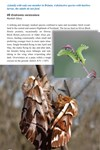 Moths of Great Britain and Ireland page 52