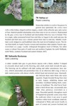 Moths of Great Britain and Ireland page 74