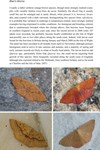 Moths of Great Britain and Ireland page 95