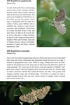 Moths of Great Britain and Ireland page 157