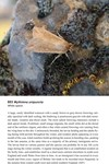 Moths of Great Britain and Ireland page 476