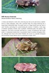 Moths of Great Britain and Ireland page 503