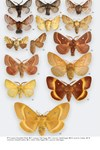 Moths of Great Britain and Ireland page 524