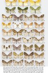 Moths of Great Britain and Ireland page 534