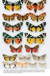 Moths of Great Britain and Ireland page 550